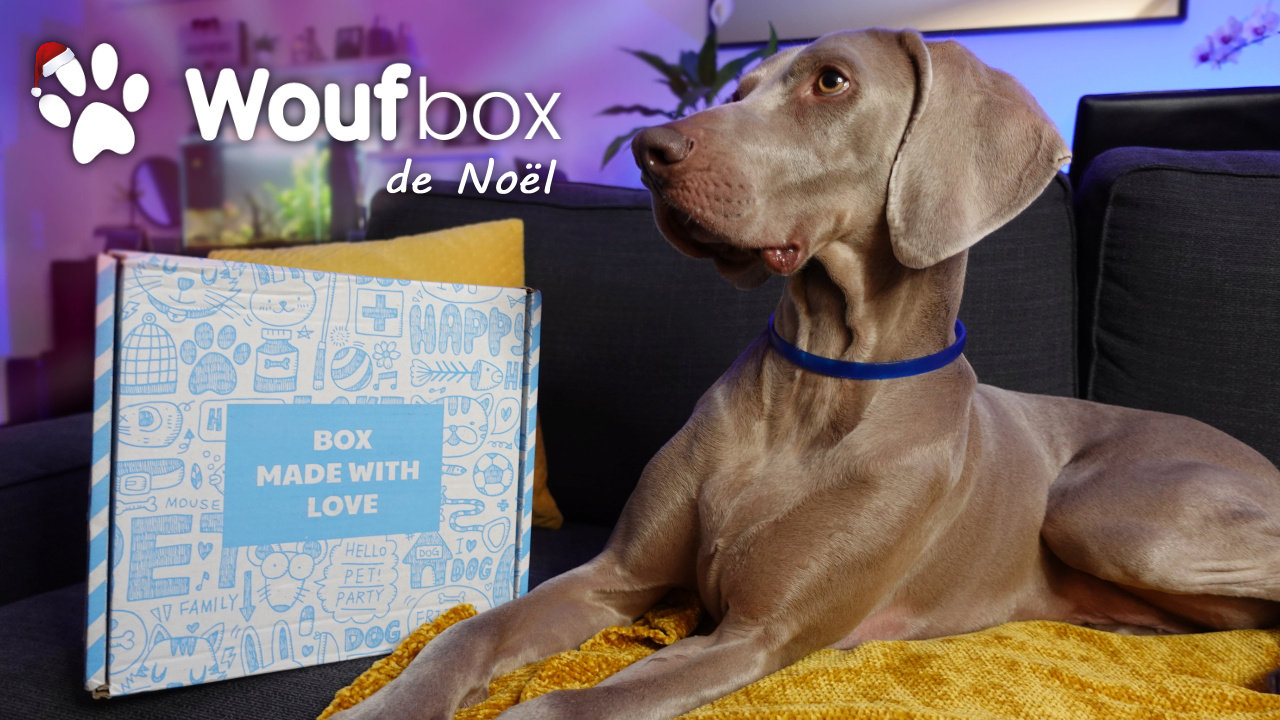 Notre chien déballe sa Woufbox de Noël Woufbo10