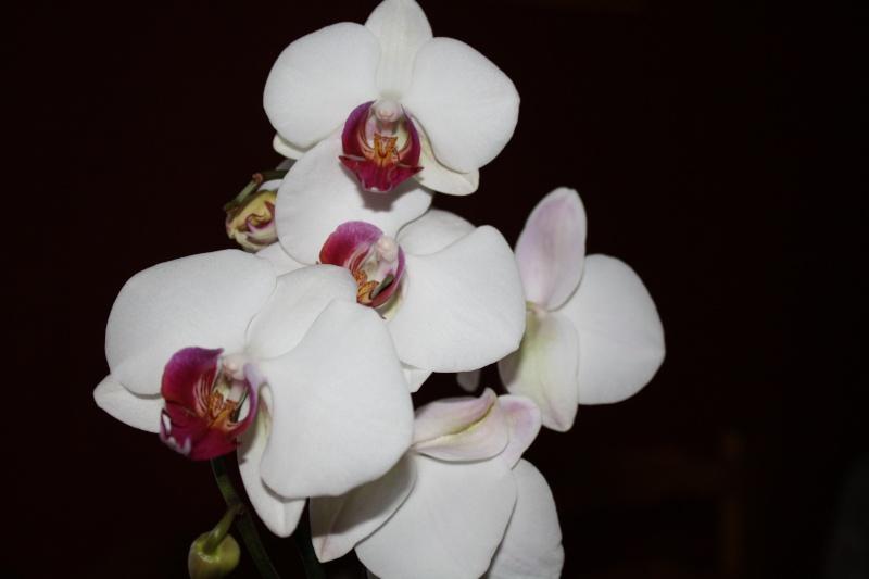 Les Orchidées - Page 6 Img_0320