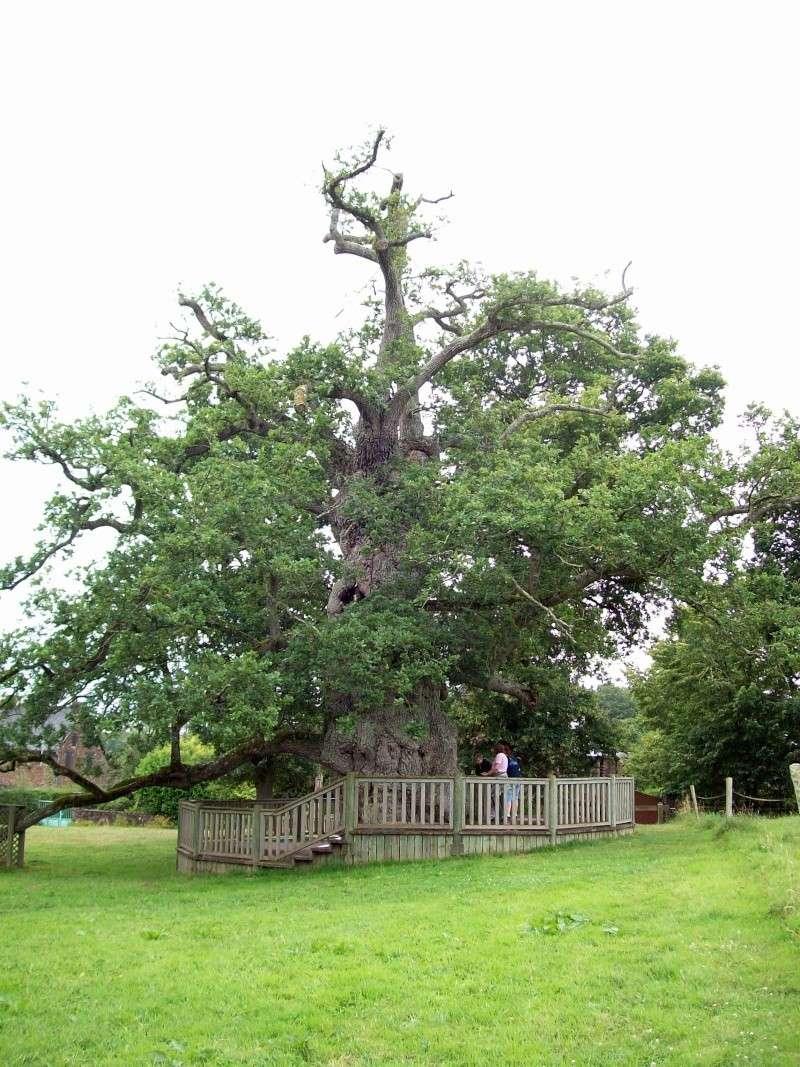 si j'étais un arbre, je serais... 100_0712