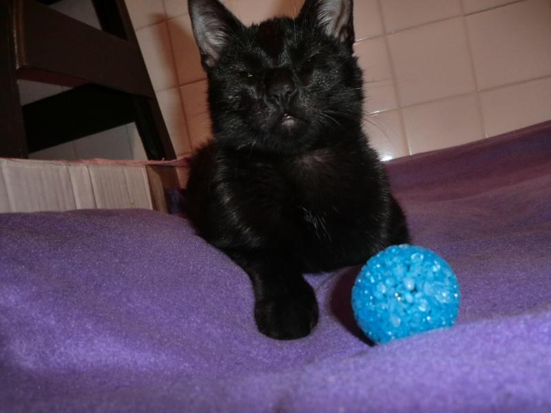 Khéops et Khephren 2 grands chatons noirs7 mois Cimg1012