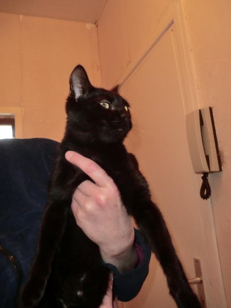 Khéops et Khephren 2 grands chatons noirs7 mois Cimg1016