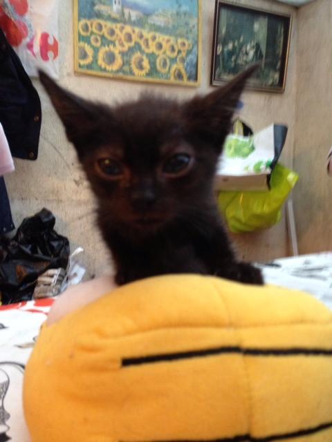 4 chatons de3 mois a 9mois Noir_j10