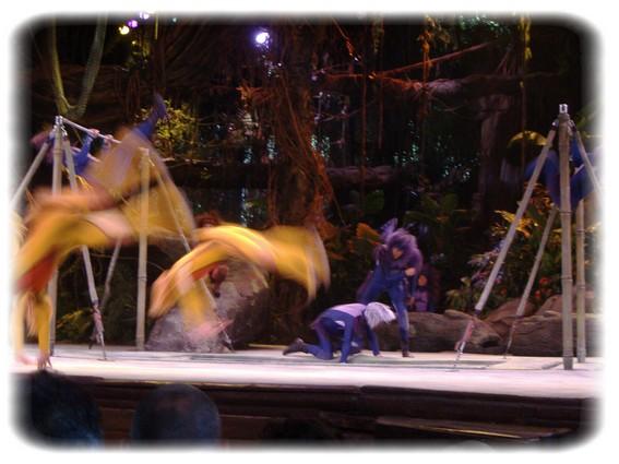 Spectacle: Tarzan, la rencontre. (représentation annulée pour 2013) Dscf2915