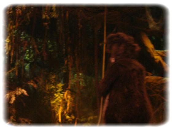 Spectacle: Tarzan, la rencontre. (représentation annulée pour 2013) Dscf2936
