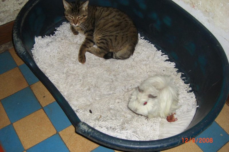 mes animaux Chat_010
