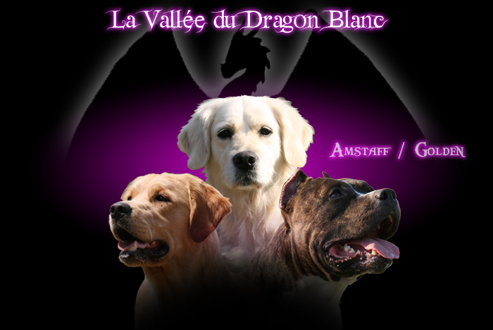 Forum de l'élevage de la Vallée du Dragon Blanc