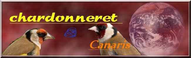 chardonneret &canaris