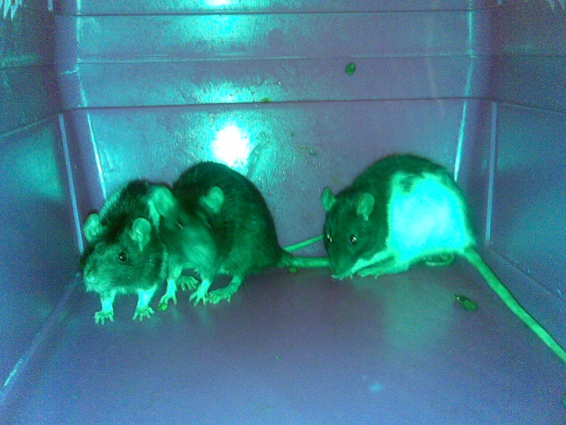 Toute une famille de rats ! Photo_44