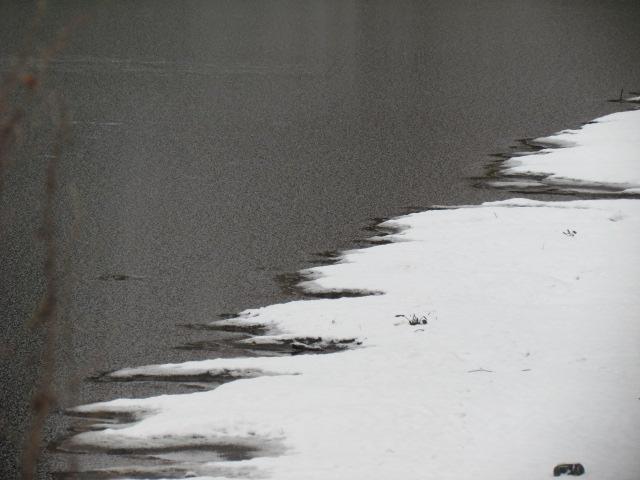 ils ont pollué, mon lac.......... - Page 4 2710