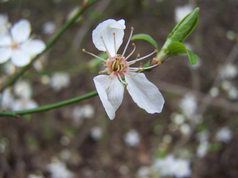 Dans l'attente du printemps ... Les bourgeons - Page 3 7010