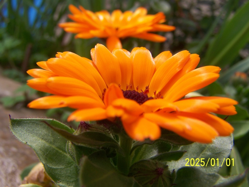 Fleurs - Fruits.......Bri - Page 10 Avril_10