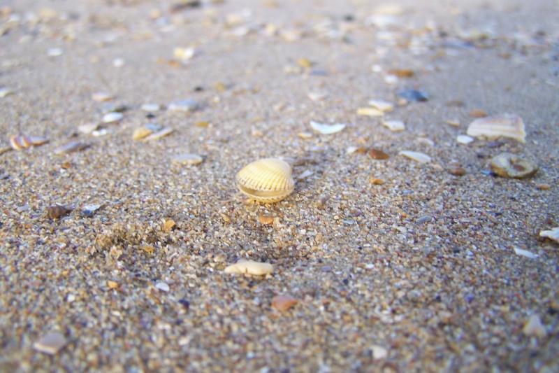 la mer, les dunes le littoral, les falaises, les bateaux Janvie11