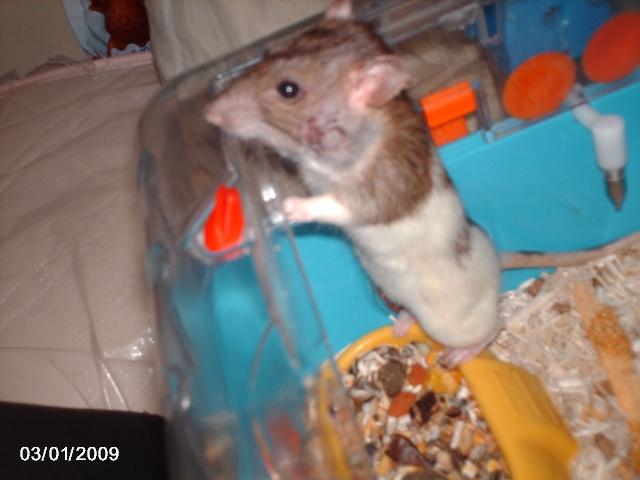 les rats de l'arche Zelda_11
