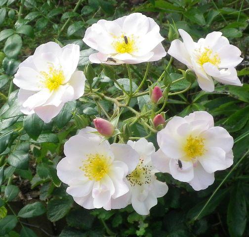 'Sourire d'Orchidée' !!! - Page 2 02102014