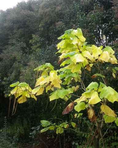 couleurs d'automne 04112014