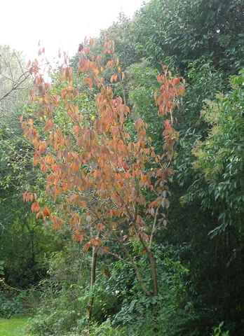 couleurs d'automne 04112015