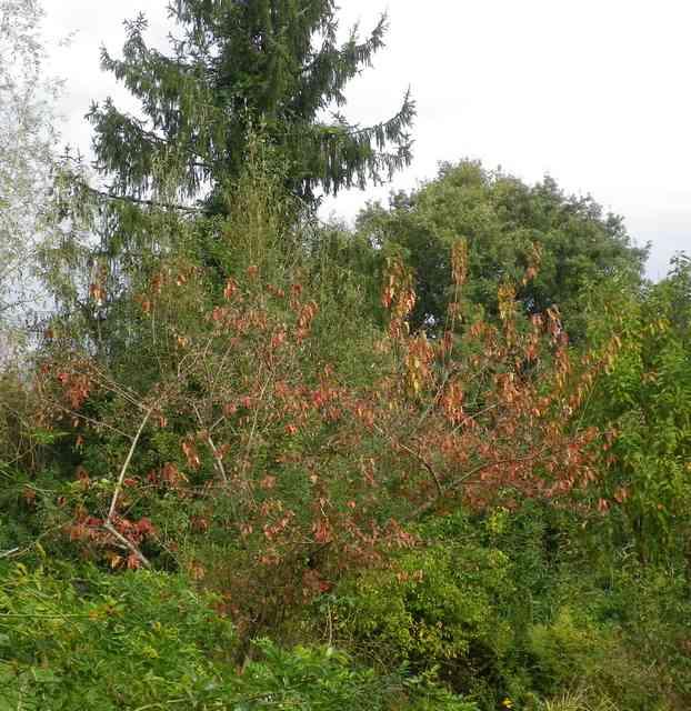 couleurs d'automne 04112016