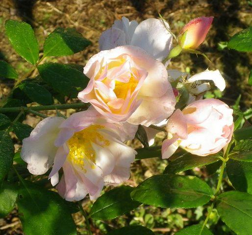'Sourire d'Orchidée' !!! - Page 2 24092018