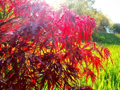 34 - La couleur rouge !!! Acer_p10