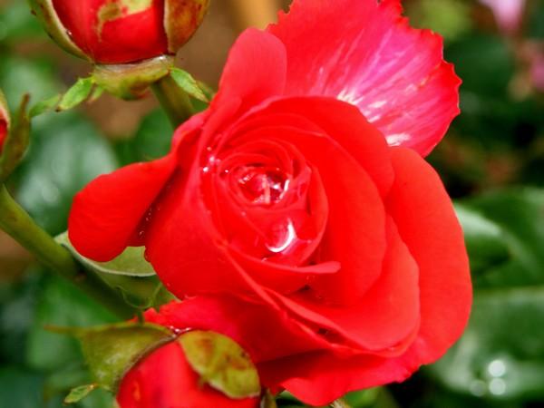 34 - La couleur rouge !!! Photo_10