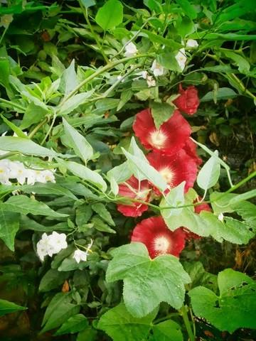 34 - La couleur rouge !!! Rose_t11