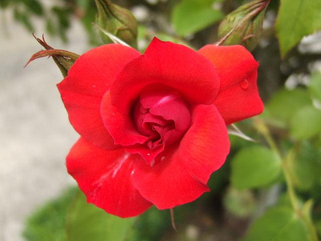 34 - La couleur rouge !!! Rouge_10