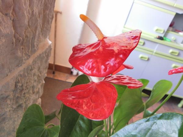 34 - La couleur rouge !!! Rouge_11