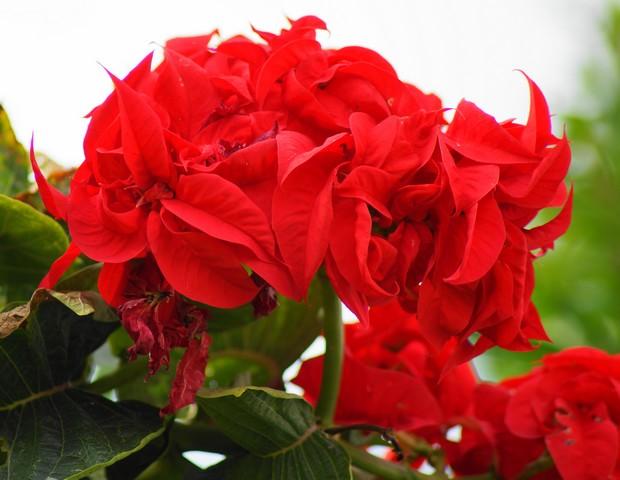 34 - La couleur rouge !!! Senne10