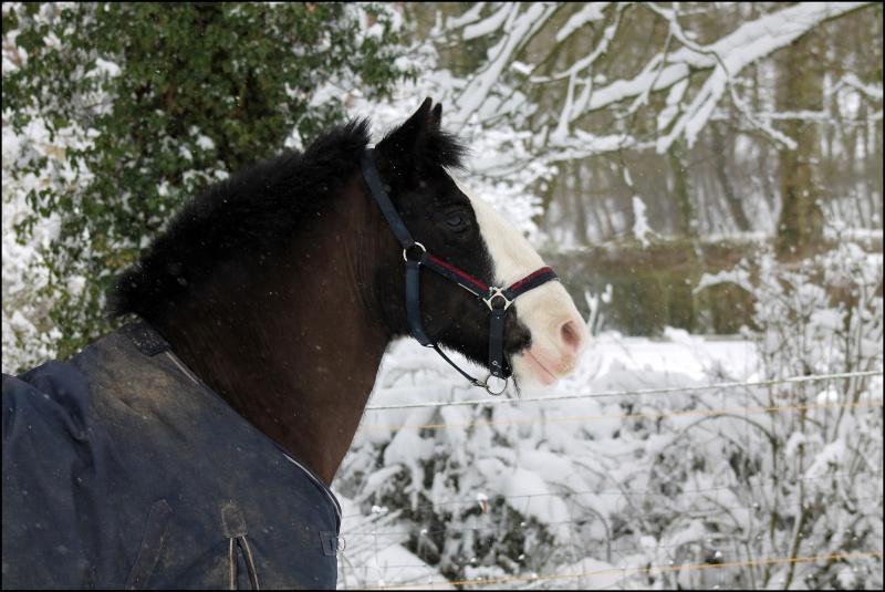 Buffalo et la neige Img_2110