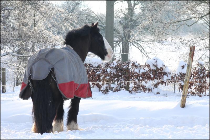 Buffalo et la neige Img_2210