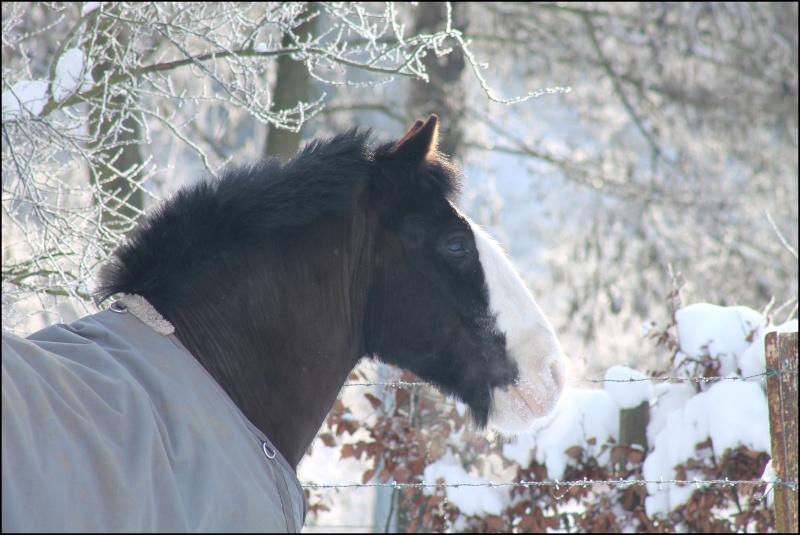 Buffalo et la neige Img_2211