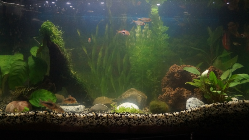 changement dans l'aquarium Dsc08314