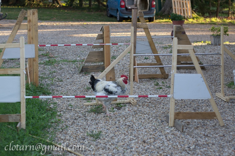 Fabrication d'obstacles d'agility - Page 7 Bricol10