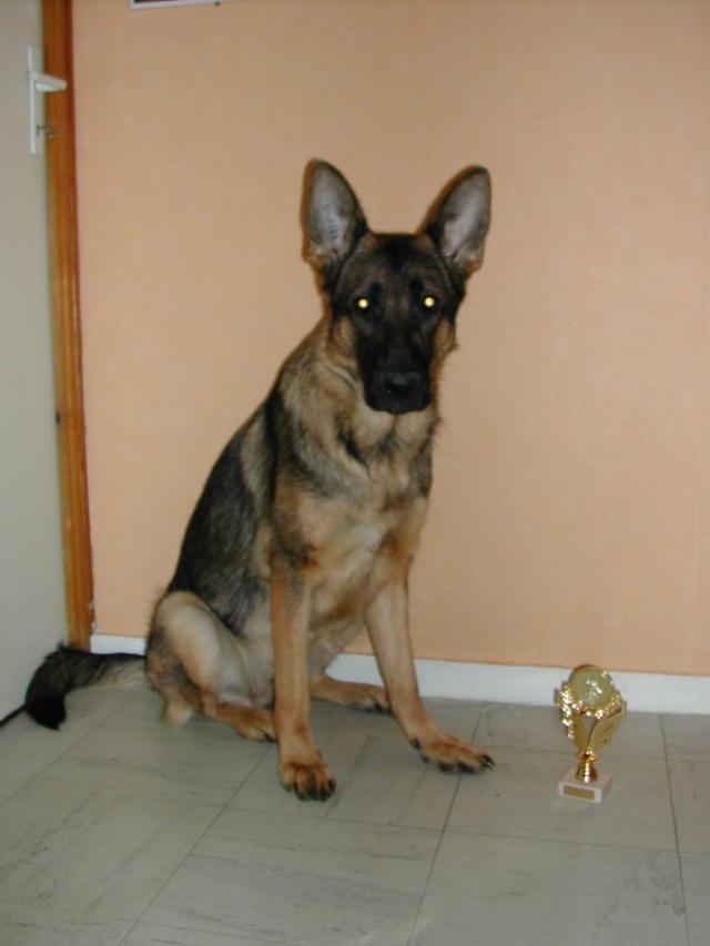 Concours de vos chiens Dscn1610