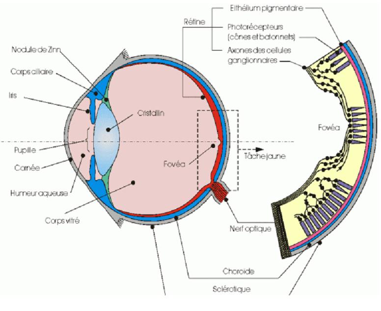 Optique géométrique (focale/lentilles/spectre/lumière etc.) 110
