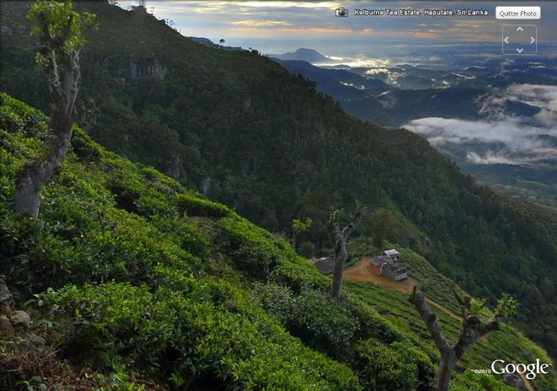 [SRI LANKA] - Les belles vues du Sri Lanka Tea_es10