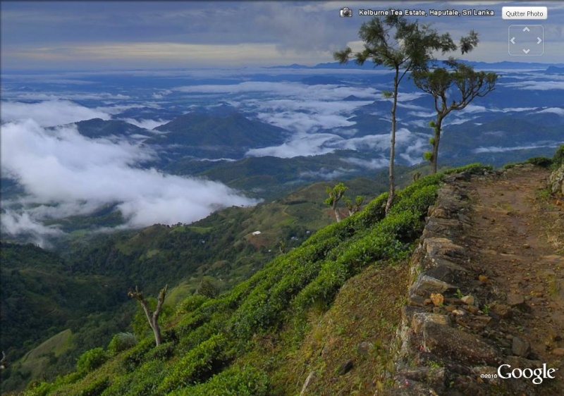 [SRI LANKA] - Les belles vues du Sri Lanka Tea_es11