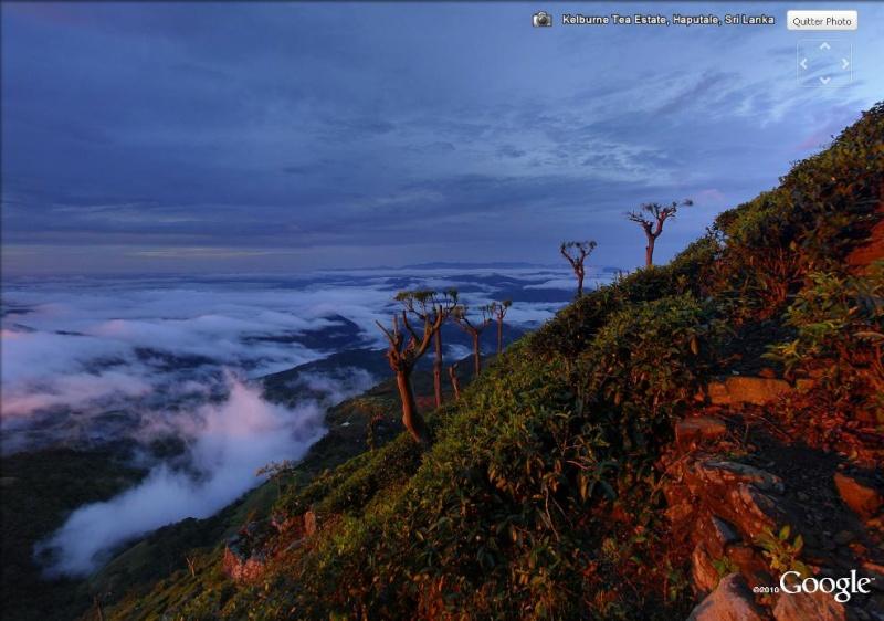 [SRI LANKA] - Les belles vues du Sri Lanka Tea_es12