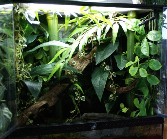 J'ais enfin fini mon terrarium naturel... Hex10