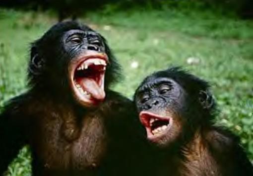 volcans qui vocifère - Page 2 Bonobo10