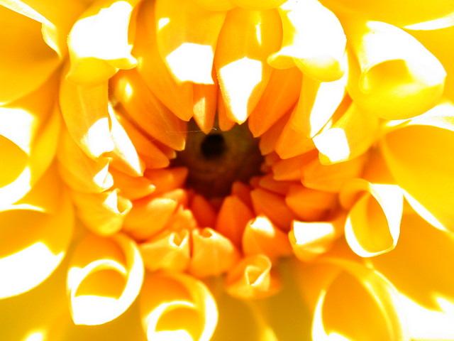 floraisons macro Dscn6719