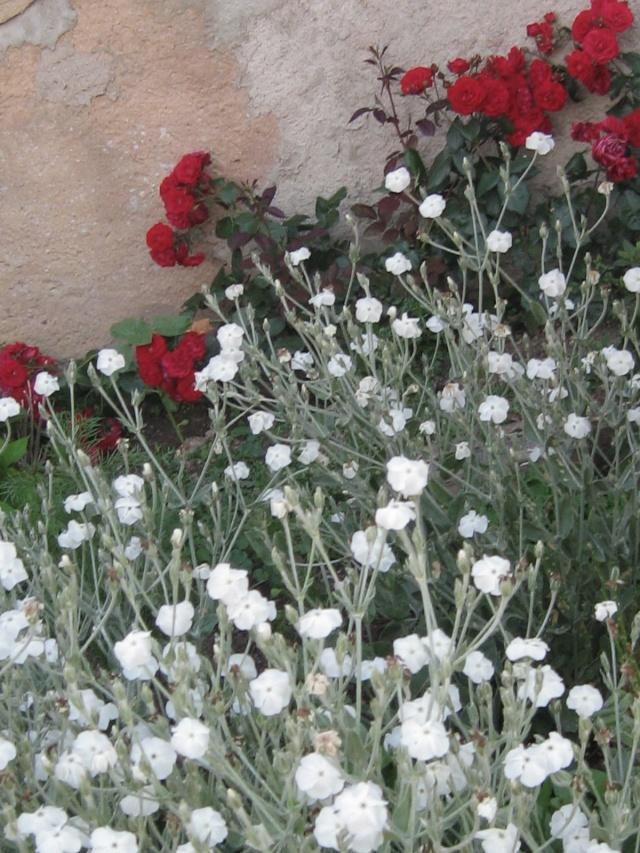 mon extérieur fleuris de mon chez moi lol - Page 3 4_13110