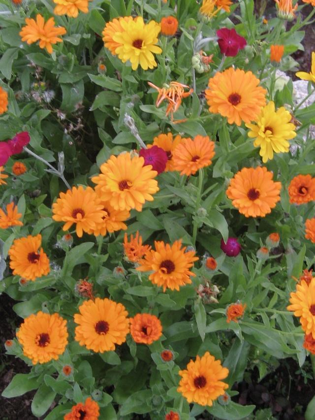 mon extérieur fleuris de mon chez moi lol - Page 3 4_13210