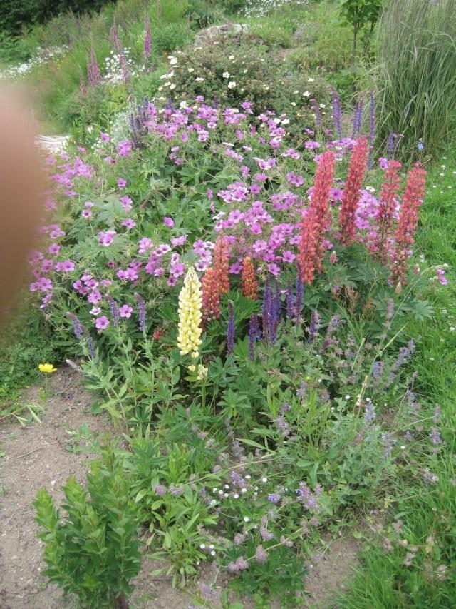 mon extérieur fleuris de mon chez moi lol - Page 4 4_32810