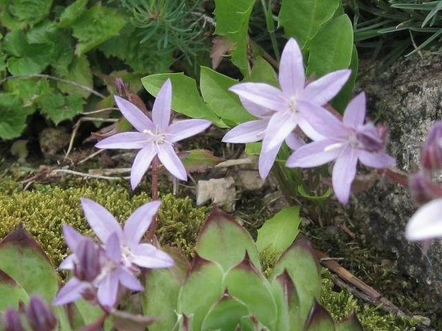 mon extérieur fleuris de mon chez moi lol - Page 4 4_34710