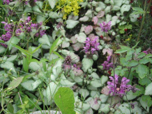mon extérieur fleuris de mon chez moi lol - Page 4 4_35110
