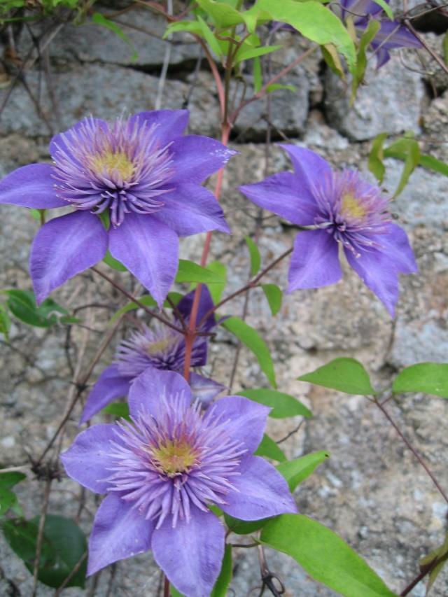 mon extérieur fleuris de mon chez moi lol - Page 4 Img_0529