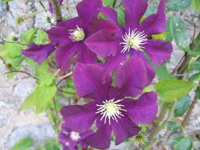 mon extérieur fleuris de mon chez moi lol - Page 4 Img_0531
