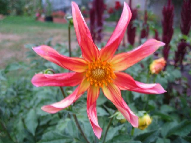 mon extérieur fleuris de mon chez moi lol - Page 4 Img_0533