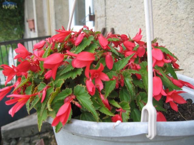 mon extérieur fleuris de mon chez moi lol - Page 4 Img_0534